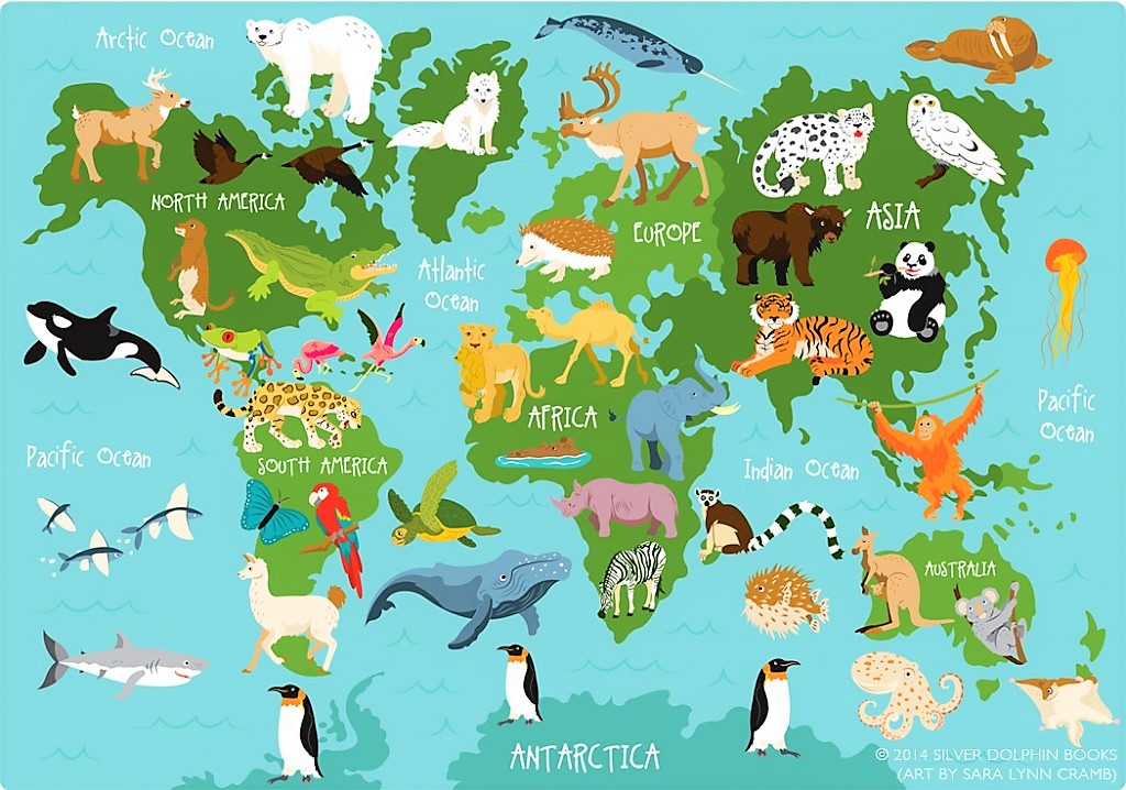 Summer Term Project – Animals from around the World