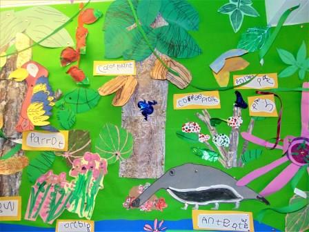Plant habitats Tropical rainforest 6