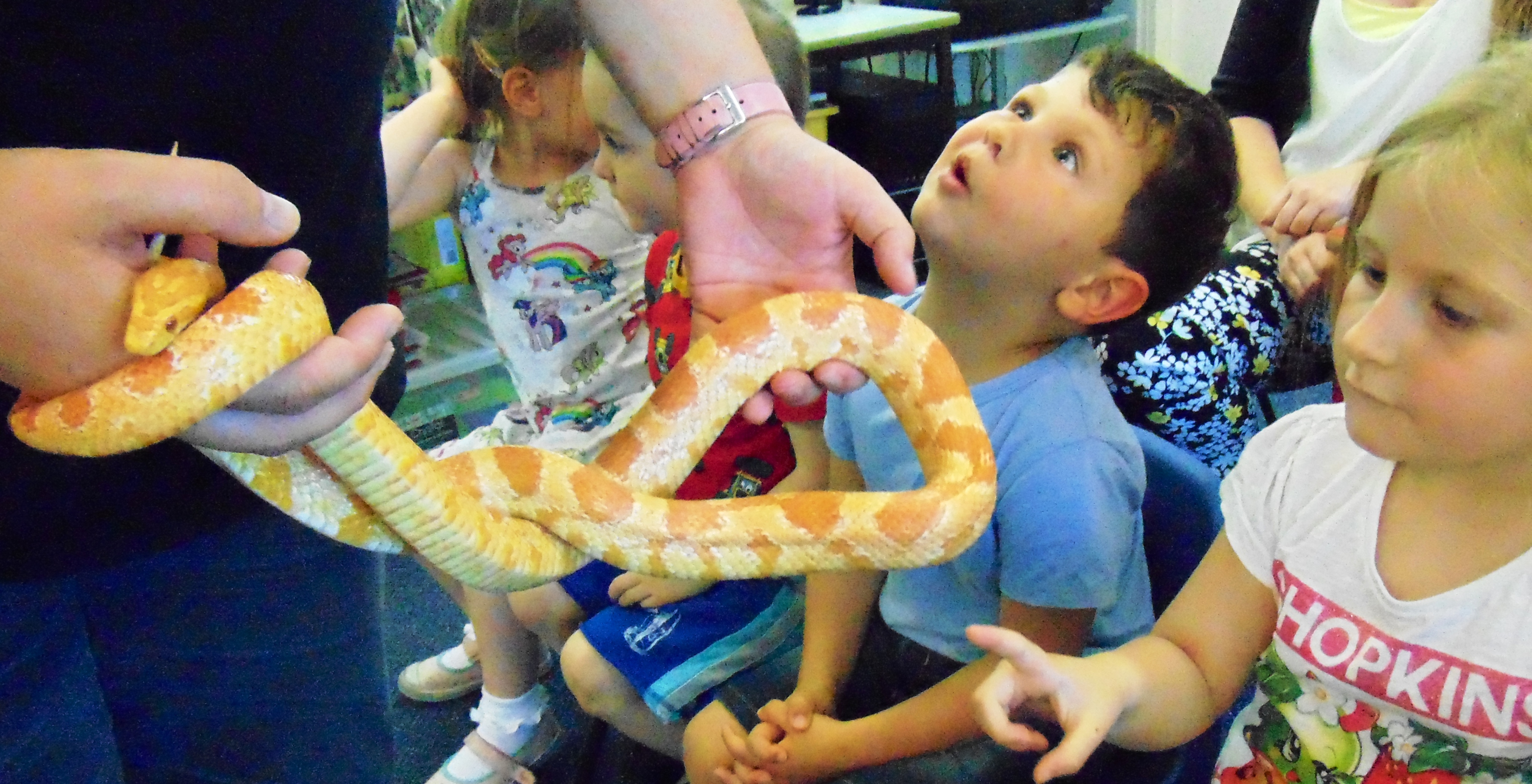 Zoolabs Workshops